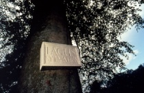 Names of Plaques, Names of Trees (Ian Hamilton Finlay)